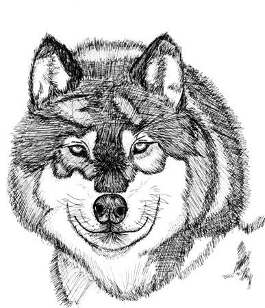 File:Firstwolf.jpg
