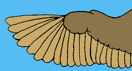 File:Bird-wing-example.PNG