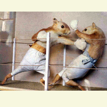 File:TaxidermyHartPrizeFight.jpg