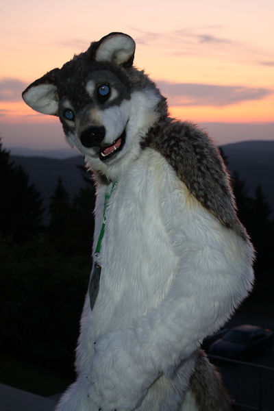 File:RandonWolfFursuit.jpg