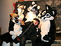 Fursuit photo shoot at Les Mondes Hors-Pistes.jpg