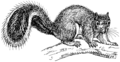 Squirrel (PSF).png