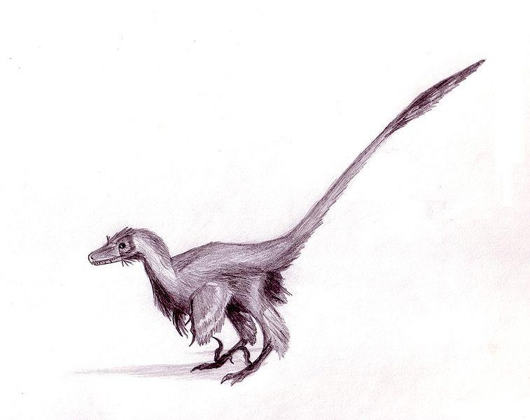 Raptor WikiFur The Furry Encyclopedia