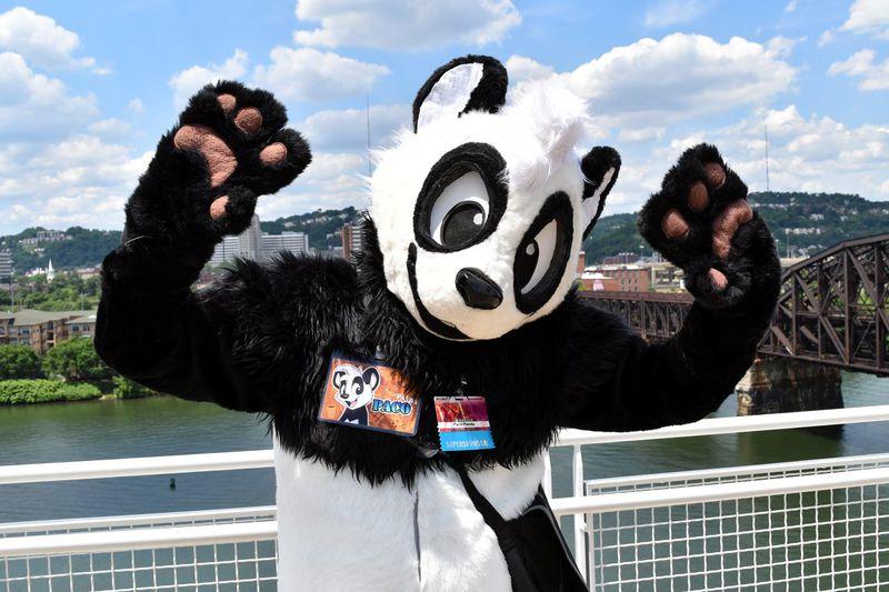 panda paco wikifur the furry encyclopedia